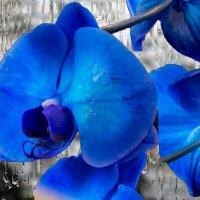 Голубое чудо :: Наталья Лакомова