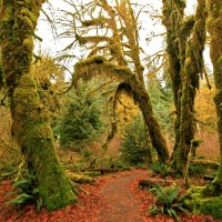 Rain Forest. USA :: Евгений Фомин