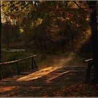 Через лес лежит дорога :: Ирина Данилова