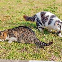 Сценка из кошачьей жизни... :: Елена Васильева