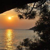 сосновый закат в Хорватии :: Елена Познокос