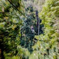 Полет над джунглями :: Константин Василец