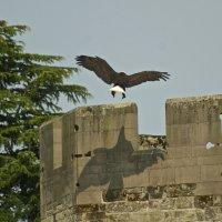 Большая птица :: MVMarina