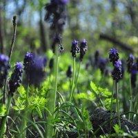 Весна :: Василий Вершигора