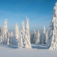 Снежные великаны :: Анатолий