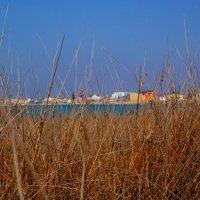 люблю я летом полежать в траве :: Андрей Козлов