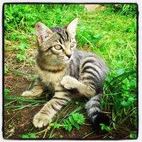 Котька :: Александр Жуков