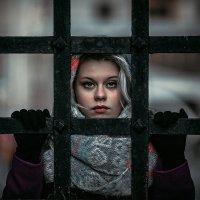 Галочка :: Дмитрий Седых