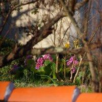 первые весенние цветы в феврале. :: Елена Мартынова