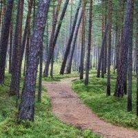дорога в лесу :: Oleg Mechetin