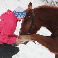 Предложение руки и сердца :: Julie Shmidt