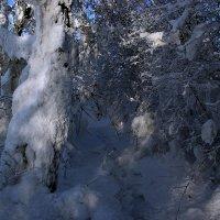 По следам снежного человека :: Kassen Kussulbaev