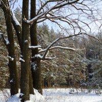 Зимний пейзаж :: Ирина Голубева