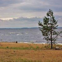 Одиночество :: Зинаида Молчанова