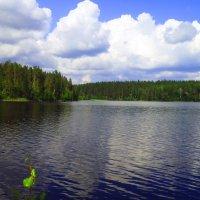 облака над лесным озером :: Сергей