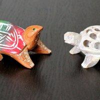 Загадка 3: Какая черепаха тайская, какая индийская? Ответ будет завтра ))) :: Владимир Шибинский