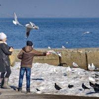 Мальчик кормит птиц. :: Александр Анатольевич