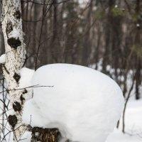 Февральские грибочки - 3 :: Виталий Моисейкин