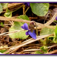 Весна :: Irina