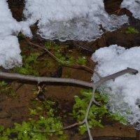 Лето и зима :: Ксения