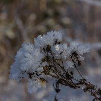 Зимние цветы :: Николай Колонтай