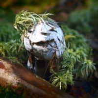 Хулиганистый гриб :: Валерий Талашов