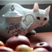 - чаю не нальёте ли?.. ) :: Марина Буренкова