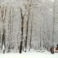 После снегопада :: Елена Перевозникова