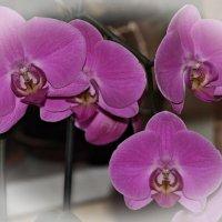 орхидея :: Nonna