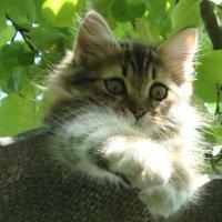 Крыши созданы для котов :: NICKIII Михаил Г.