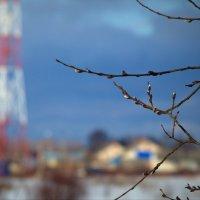 Вот такая вот зима в Наволоках :: Олег Субботин