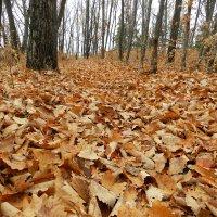 Поздняя осень :: Николай Сапегин