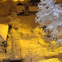 сразу после снегопада.... :: Наталья Меркулова