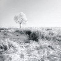Во поле берёза... :: Александр Никитинский