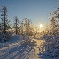 Морозная тишина!!! :: Олег