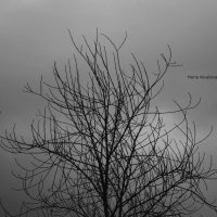 Дерево :: Мария Ковалёва