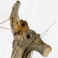 Лесной рогатик :: Николай Ефремов