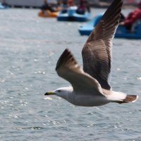 Чайка :: Полина Иванова