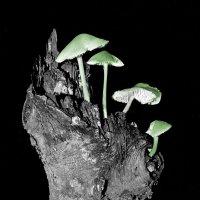 Странные грибки :: Валерий Талашов