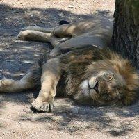 Царь спит :: Андрей Дворников