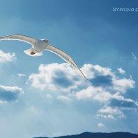 Пролетая над Гурзуфом :: Аня Смирнова