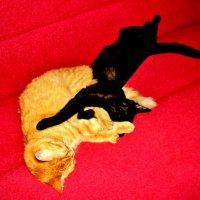 Есть где то, кошачья планета.Там кошки как люди живутЧитают в постели газеты И кофе со сливками пьют :: Ольга Кривых