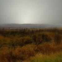 Осень :: Наталья Лакомова