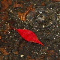 Осень в миниатюре :: Михаил