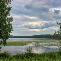 Над водой стоит трава густая... :: Наталья Юрова