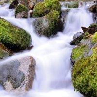 молочные реки :: Андрей Гомонов