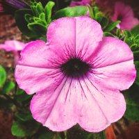 Какие-то цветочки во дворе :: Евгения Латунская