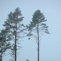 туман зимой :: Константин Pasko