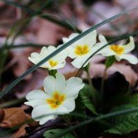 весна :: Дашка Сергевна