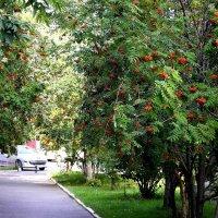 Такая вот красавица осень... :: Инна Ивановна Нарута